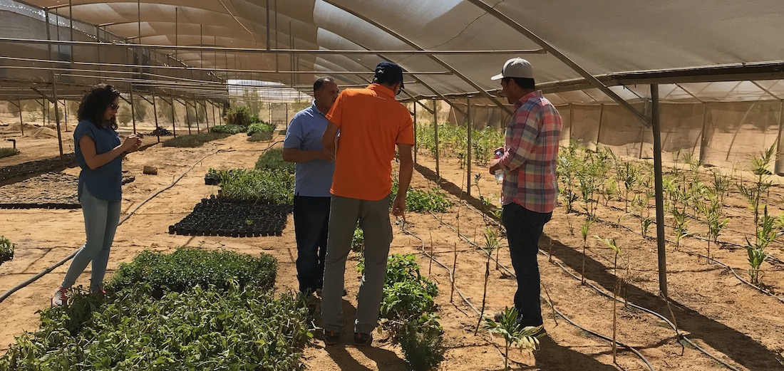 Assessment of the nursery with drip-irrigated greenhouses