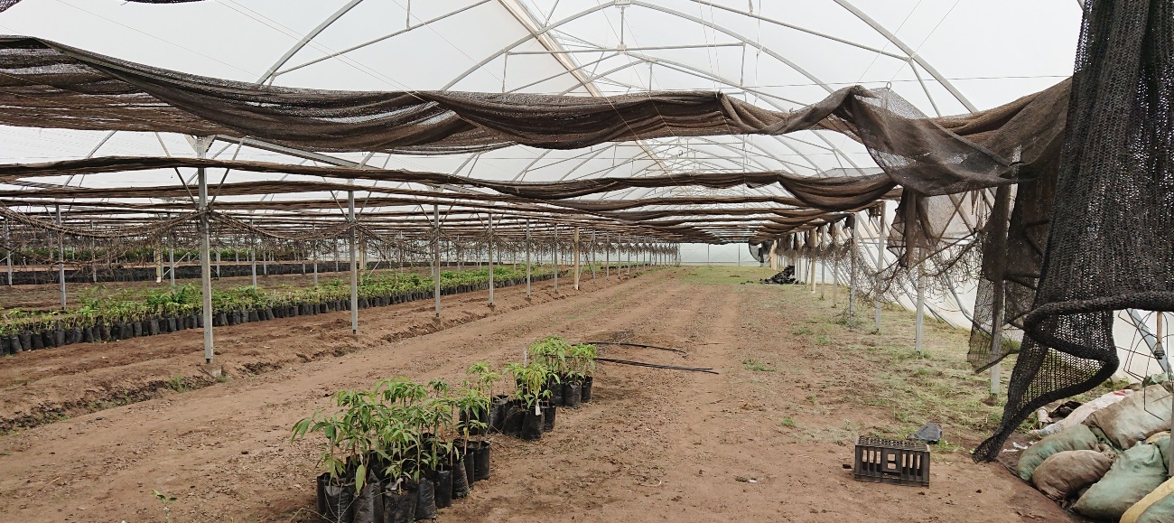 Inspection of greenhouse nursery