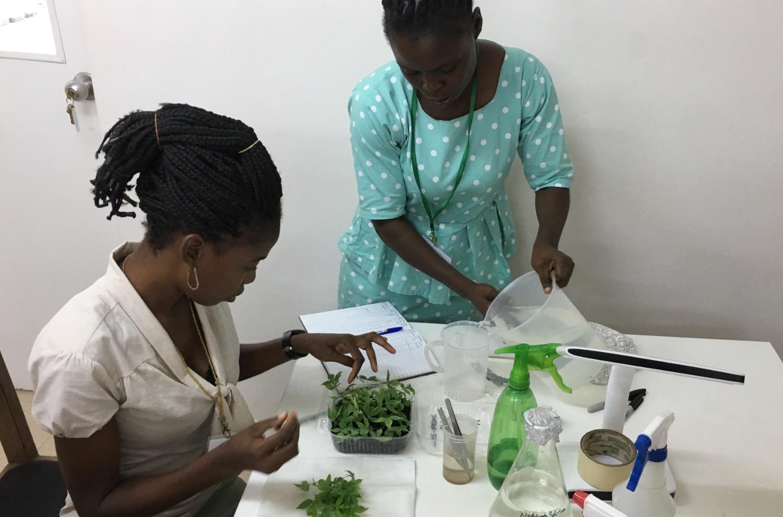 Assessment of cassava nursery