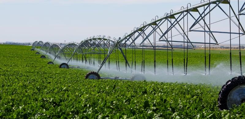 Pivot irrigated fields